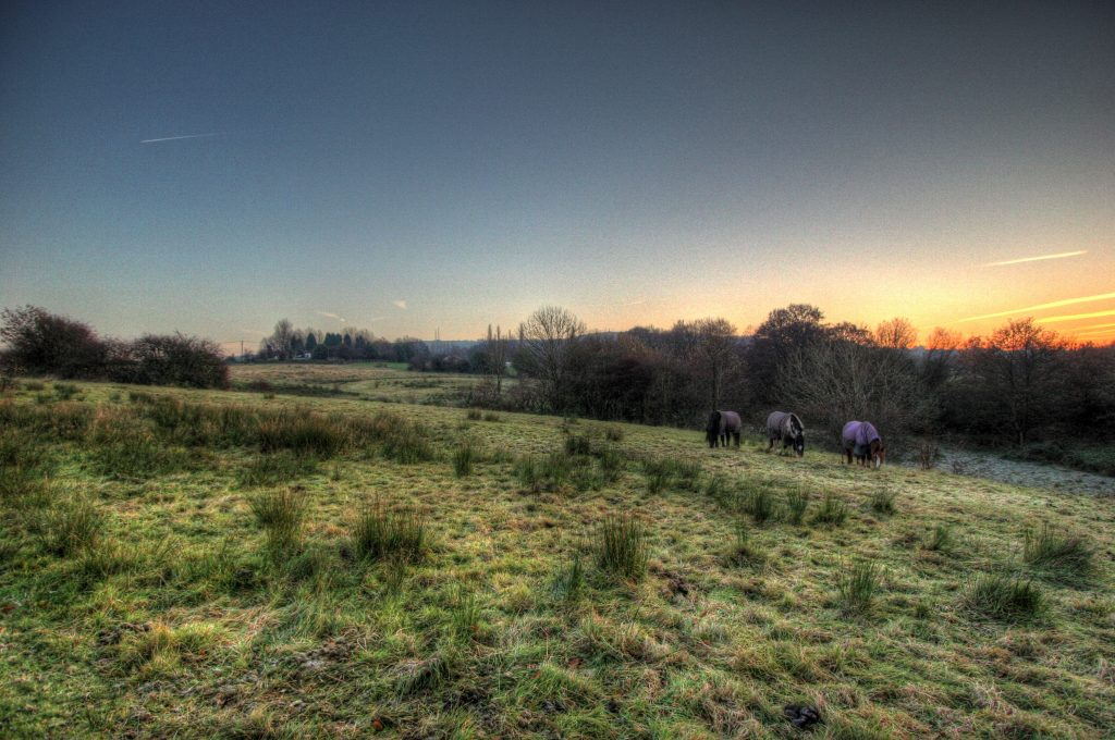 Horses grazing at sunset within Godley Green