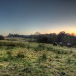 Horses at Godley Green